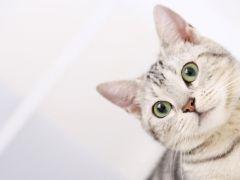 可爱猫咪图片高清