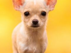 可爱狗狗图片高清