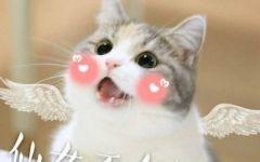 猫图片大全可爱卖萌