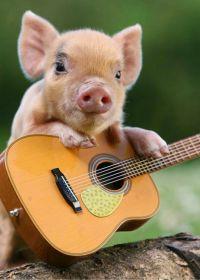 可爱的小猪图片大全