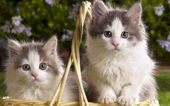 可爱小猫图片高清