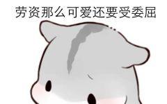 可爱仓鼠卖萌图片卡通