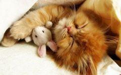 睡觉猫猫图片大全可爱