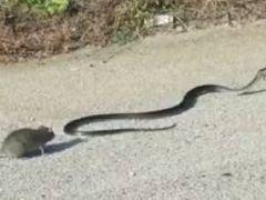 蛇与老鼠图片大全可爱