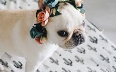 可爱狗狗头像图片大全
