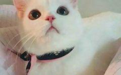萌猫图片大全可爱图片