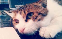 猫动物表情图片大全可爱