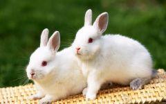 兔子可爱图片