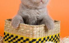 猫的图像大全可爱图片