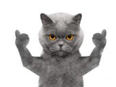 猫表情图片高清