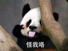 大熊猫表情图片