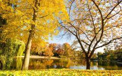 秋天的唯美图片