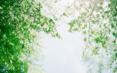 小清新图片绿色唯美