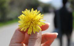 手拿一朵花的图片唯美