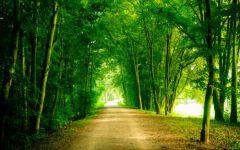 绿色的风景图片唯美