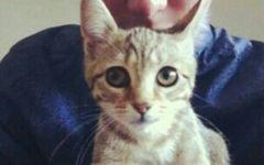 情侣猫咪人图片