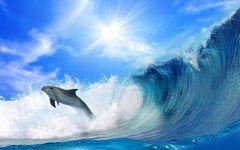 海豚图片大全可爱图片