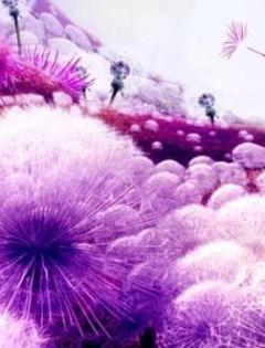 紫色唯美爱情浪漫图片