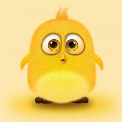 微信头像动物图片小鸟