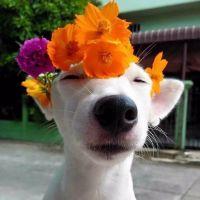 狗狗情侣头像一对