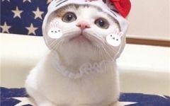 猫咪的情侣头像