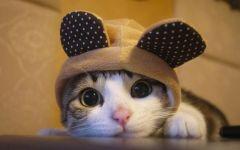 猫猫可爱图片