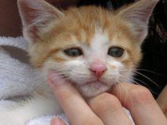 动物难过表情图片大全可爱图片