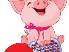 小猪照片可爱图片大全可爱