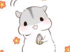 仓鼠可爱图片卡通