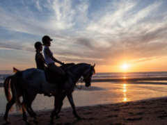 海边骑马唯美图片
