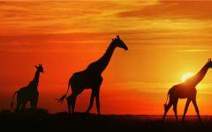 夕阳西下唯美图片