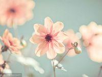 清新图片唯美阳光鲜花