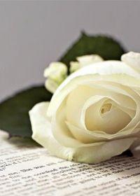 唯美图片花束
