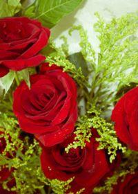 唯美图片花朵玫瑰