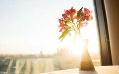 有关阳光的图片唯美