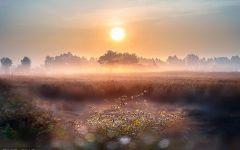 阳光早晨的图片唯美