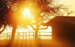 早上的太阳图片唯美
