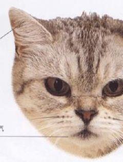 动物面部表情图片大全