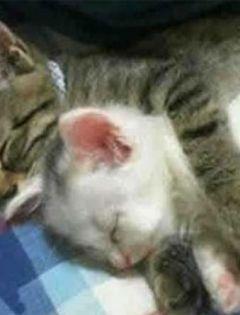 猫咪情侣高清壁纸