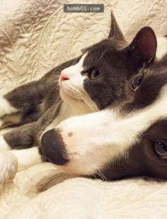 情侣猫狗图片大全可爱