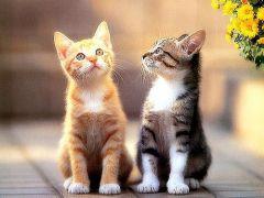 猫咪情侣图片