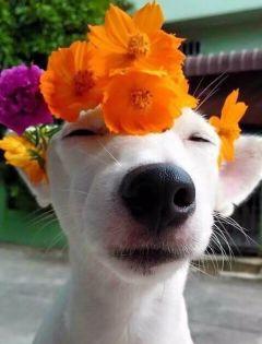 狗头像图片搞笑情侣