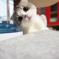 微信头像猫咪图片大全