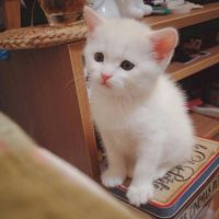 猫咪头像图片微信头像