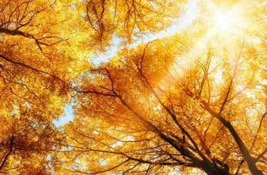 微信头像树木风景的