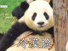 大熊猫表情包原图