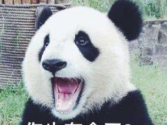 大熊猫表情包图片