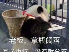 可爱熊猫表情包图片