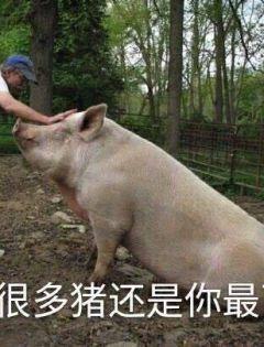 猪表情包搞笑图片