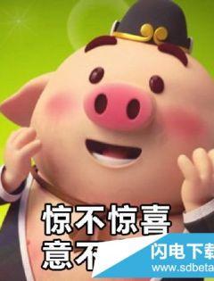 qq小猪表情包图片大全